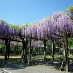 愛媛の花の名所に行ってみたい!愛媛の花に囲まれる名所6選!