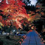 美しい紅葉が期間限定ライトアップ♪ ミシュラン三ツ星を獲得した日本三景・松島の「円通院」