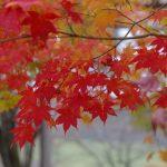 札幌から日帰りドライブで紅葉を楽しむ。実際に見た絶景ポイントをご紹介!