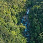 世界最古の熱帯雨林!オーストラリア「モスマン渓谷」に行こう!