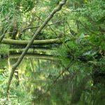 森林でマイナスイオンを浴びよう!自然の神秘的が見られる杉沢の沢スギ林