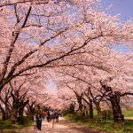 春におすすめ♡関東にあるおすすめの桜名所5選!