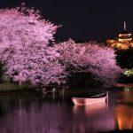 今年のお花見は夜桜で決まり♪