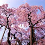 """家族旅行やデートにいかが?一生の思い出になる日本各地の""""春限定絶景""""まとめ"""