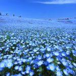 こんな景色が日本でも!日本にある「青の絶景」まとめ