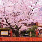 京都の春におすすめな観光地ランキングベスト10!数ある名所から厳選!