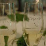 美味しいワインが飲みたい!オーストラリア「ヤラ・ヴァレー」のワイナリー5選