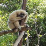 たくさんの動物に触れ合える!オアフ島のホノルル動物園にいる動物まとめ