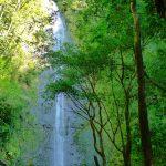 山奥にある滝を見る!ハワイのマノア滝の魅力