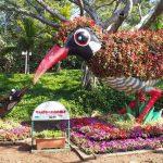 色とりどりの美しい花が見られる!沖縄県で開催される「美ら海花まつり」について