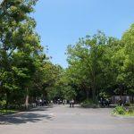 上野公園周辺の事前予約できる駐車場まとめ。上野、秋葉原、浅草など人気の観光スポットへのアクセスに便利な駐車場情報