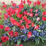 フローランテ宮崎はイベントがいっぱい!四季折々の花が楽しめます。