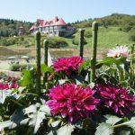 秋田で花に囲まれたい♪秋田の四季の花の名所6選