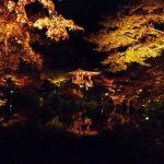 京都の紅葉スポット36選。ライトアップが素敵な絶景を押さえておこう☆