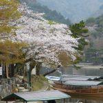 古都に映える桜!京都のおすすめ桜スポット10選