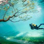 あまりにも幻想的。地上にしか咲かない草花が、水の中に咲いているのは一体なぜ?